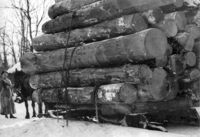 Logging operations in Schoolcraft County (1890's Photo)