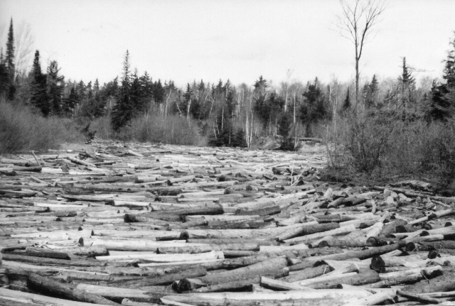Log Drive on the Manistique River (1890s Photo()